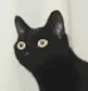 :noding_cat: